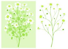 Green branch with white flowers Stock Photography