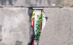 A green branch of a young tree Peeps through a crack in the gray concrete wall. The concept of dependency, captivity and. A green branch of a young tree  through stock images