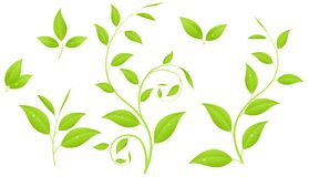 Green branches Royalty Free Stock Images