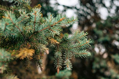 Green branches ate on a tree Royalty Free Stock Photo