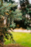 Green branches ate on a tree Royalty Free Stock Images