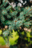 Green branches ate on a tree Royalty Free Stock Photos