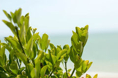 Green branches background photo near the sea side. Royalty Free Stock Photos