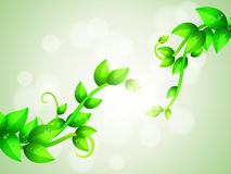 Green Branches Background Stock Image