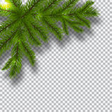 Green branches of a Christmas tree on a checker background. Corner with shadow. Christmas decorations. illustration Royalty Free Stock Image