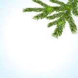 Green branches of a Christmas tree on a white background. illustration Stock Photos