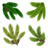 Green Branches Of Coniferous Trees Collection. With cones in realistic style  vector illustration Royalty Free Stock Photos