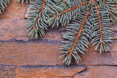 Green branches of fir Stock Photography