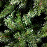 Green branches of fir-tree Stock Image