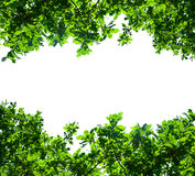 Green branches frame Royalty Free Stock Image