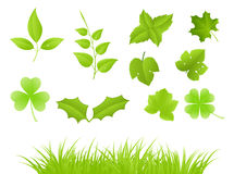 Green branches and grass Royalty Free Stock Images