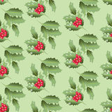 Green branches of Holly with berries. Royalty Free Stock Images