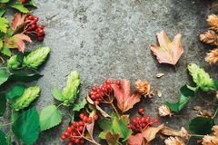 Green branches of hop and red berries of viburnum on concrete. Fresh green autumn branches of hop and red berries of viburnum on concrete background. Top view Stock Images