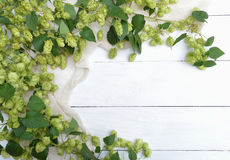 Green branches of hops with cones and leaves on a wooden background. royalty free stock photo
