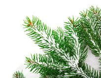 Free Green Branches Of Christmas Tree On Snow Royalty Free Stock Photos - 104242758