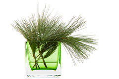 Green branches of pine Royalty Free Stock Images