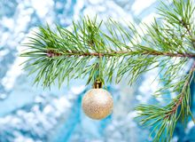 Green branches of the pine.christmas Stock Image