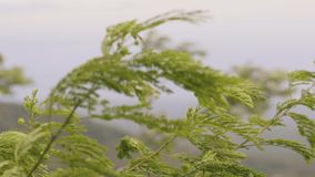 Green branches of plants sway in wind close up. Branches of green tree moving in wind on background mountain valley. stock footage