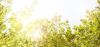Green branches royalty free stock image