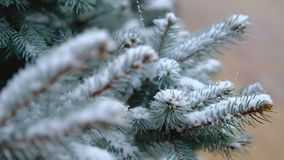 Green branches of spruce, fir under the snow. Evergreen tree. The first snow, autumn, spring, early winter. Slow Motion. Green branches of spruce, fir under the stock video