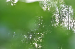 Green branches Stock Image