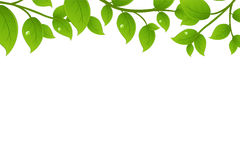 Green Branches. Vector Stock Images