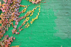 Green brick Stock Photography