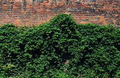 Green brick facade wall Royalty Free Stock Photo