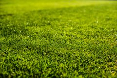 Green bright colorful grass pitch of football stafium, close up with beautiful bokeh stock images
