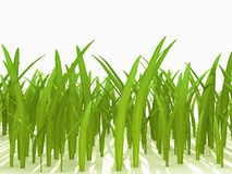 Green bright grass over white Stock Photo