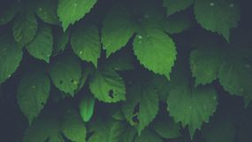 Green bright leafs at the summer stock photos
