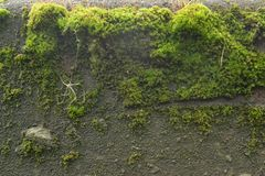 Green bright moss grows royalty free stock image