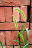 Green bristlegrass and brick Royalty Free Stock Photography