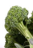 Green broccoli Stock Photos