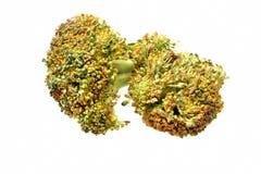 Green broccoli Royalty Free Stock Image