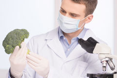 Green broccoli in genetic engineering laboratory. Royalty Free Stock Images