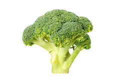 Green broccoli (isolated) Stock Photography