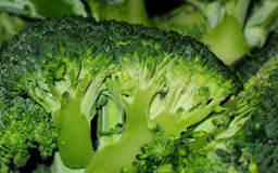 Green broccoli stock photos