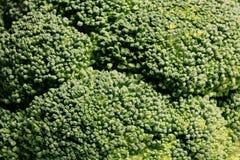 Green broccoli macro texture cabbage Royalty Free Stock Photos