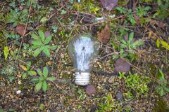 Green lamp eco light bulb energy concept stock images