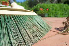 Green broom closeup Stock Image