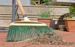 Green broom Stock Image