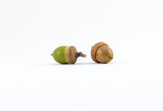 Green and brown acorns on white background Stock Photos