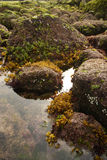 green & brown algae Stock Photo