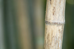 Green and brown Bamboo detail Royalty Free Stock Images