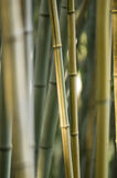 Green and brown Bamboo detail Royalty Free Stock Photos