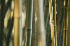 Green and brown Bamboo detail Stock Images