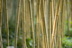 Green and brown Bamboo detail Royalty Free Stock Photography