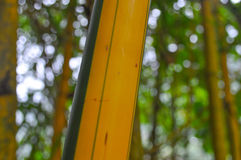 Green and brown Bamboo detail. View of a Green and brown Bamboo detail Stock Photography