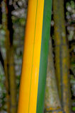 Green and brown Bamboo detail. View of a Green and brown Bamboo detail Stock Image